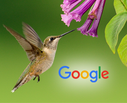 Hummingbird and SEO Marketing